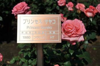 プリンセスサヤコ.jpg