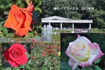 神代バラフェスタ2012秋.jpg